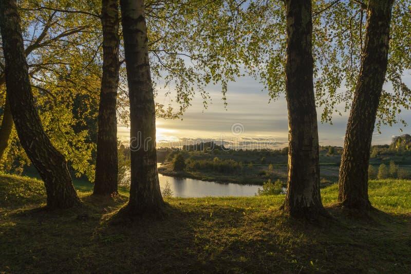 Coucher du soleil d'or et nuages par des arbres de bouleau images stock
