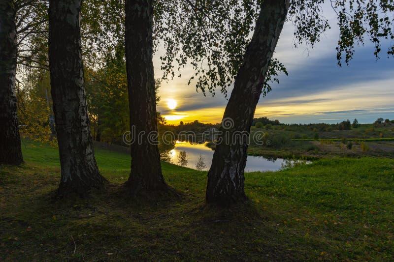 Coucher du soleil d'or et nuages par des arbres de bouleau image stock