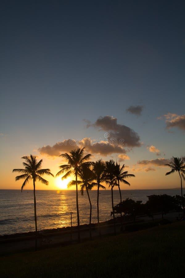 Coucher du soleil d'Hawaï avec la silhouette de palmier photographie stock