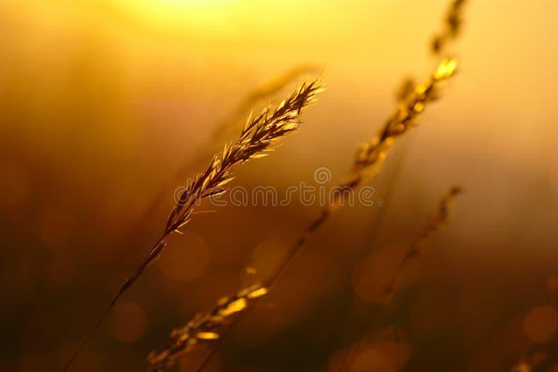 Coucher du soleil d'herbe d'été images stock