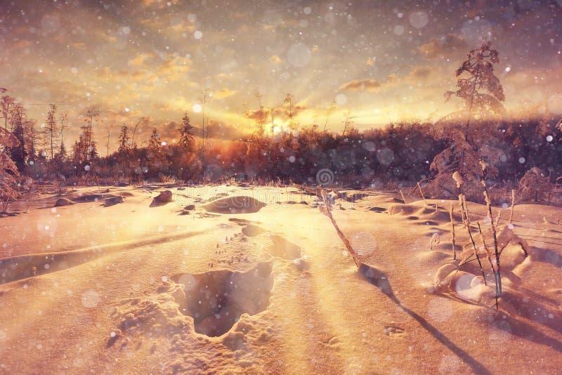 Coucher du soleil d'hiver dans la forêt image libre de droits