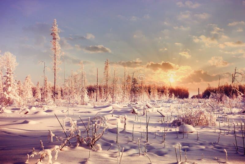 Coucher du soleil d'hiver dans la forêt images stock