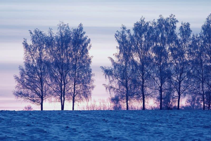 Coucher du soleil d'hiver dans le domaine photo libre de droits