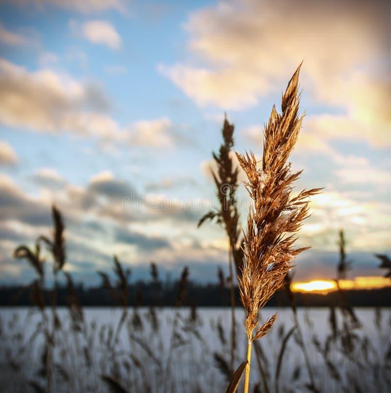 Coucher du soleil d'hiver sur la branche gelée photographie stock libre de droits