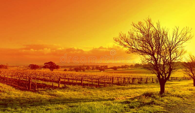 Coucher du soleil d'horizontal de vigne images stock