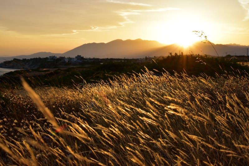 Coucher du soleil d'or stupéfiant dans le pré avec l'herbe et les montagnes photos libres de droits