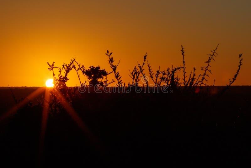 Download Coucher Du Soleil Dans Addo Avec Des Branches D'orange - Addo Landscape Photo stock - Image du course, route: 77162472