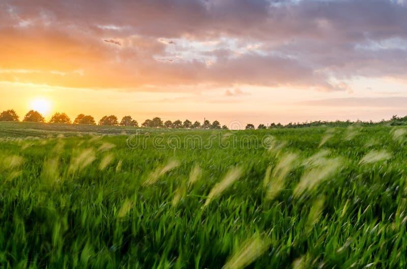 Coucher du soleil dans la campagne photo libre de droits