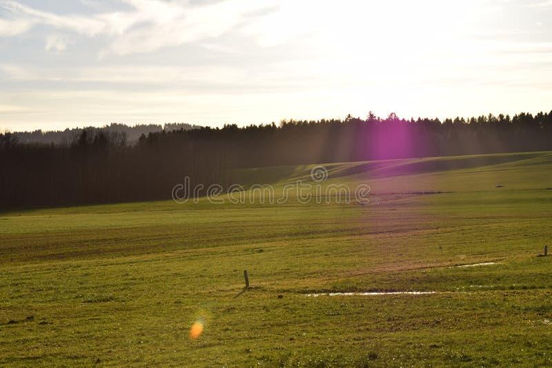 Coucher du soleil dans la campagne avec le pré et la forêt photo libre de droits