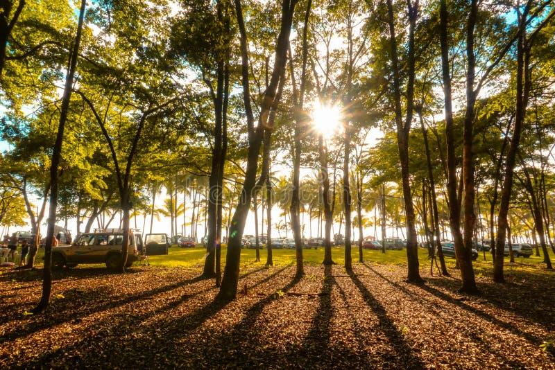 Coucher du soleil dans la forêt à Costa Rica images stock