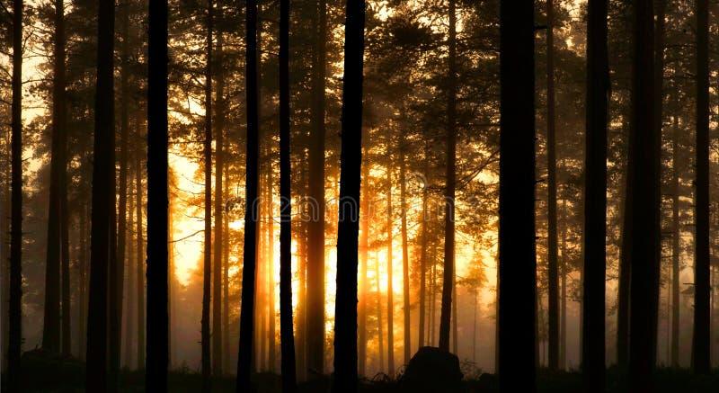 Coucher du soleil dans la forêt brumeuse photographie stock libre de droits