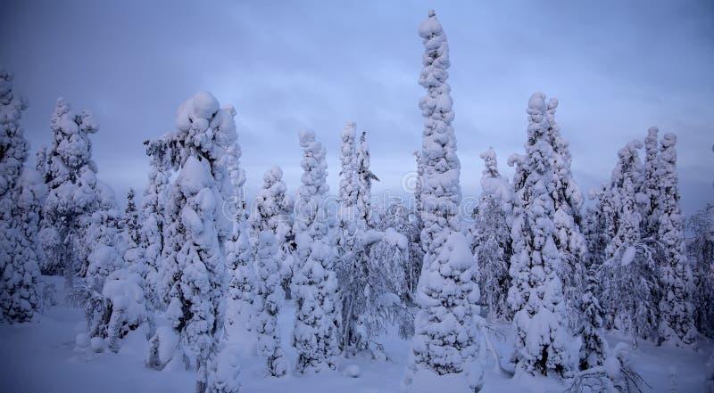 Coucher du soleil dans la forêt d'hiver photographie stock libre de droits
