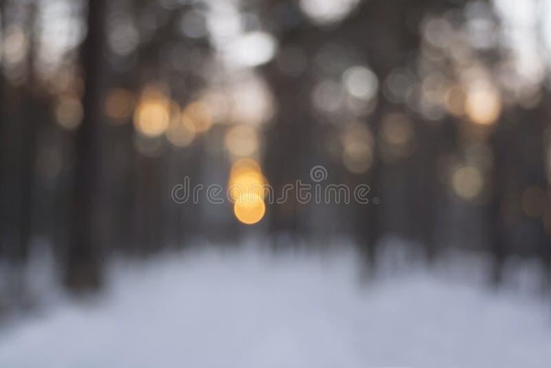 Coucher du soleil dans la forêt d'hiver - brouillez le fond de bokeh photo libre de droits