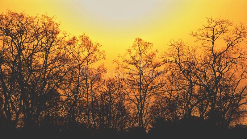 Coucher du soleil dans la jungle image libre de droits