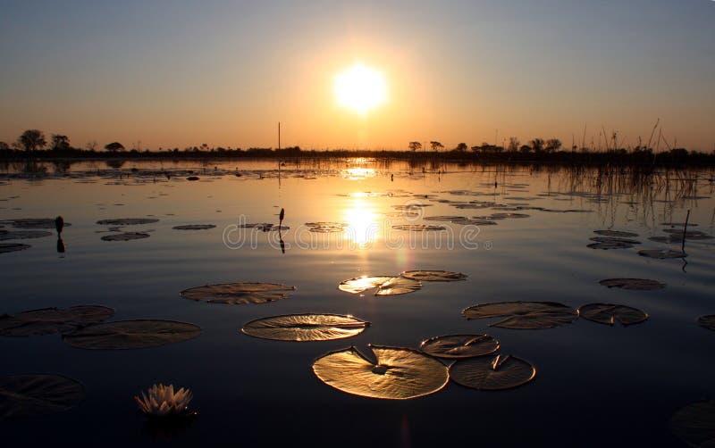 Coucher du soleil dans le delta d'Okavango, Botsuana photos libres de droits
