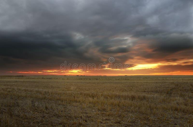 Coucher du soleil dans le domaine de blé moissonné photos stock