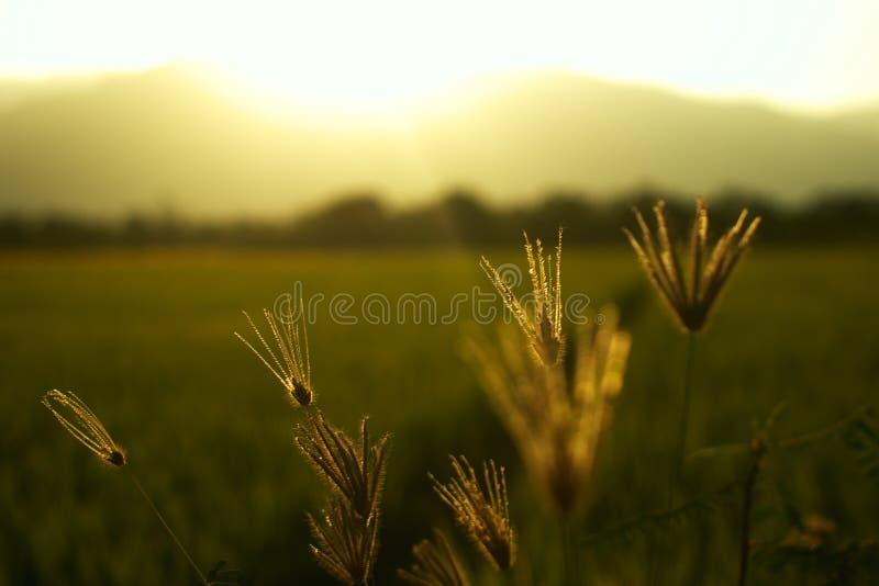 Coucher du soleil dans le domaine de riz près des montagnes photos stock