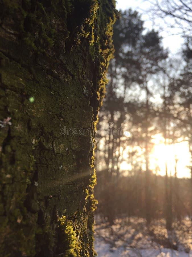 Coucher du soleil dans les bois image stock