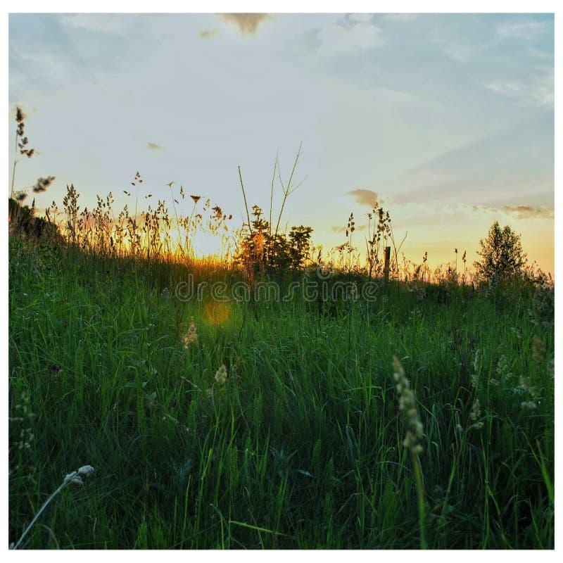 Coucher du soleil dans un domaine images libres de droits