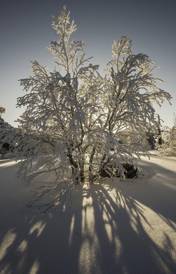 Coucher du soleil dans une forêt photos stock