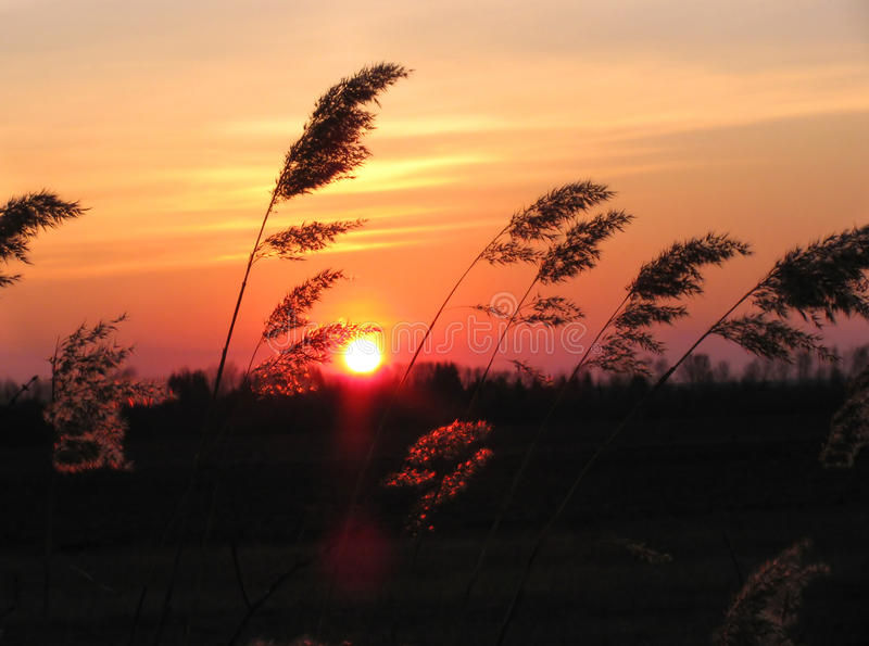 Coucher du soleil dans une prairie photo stock
