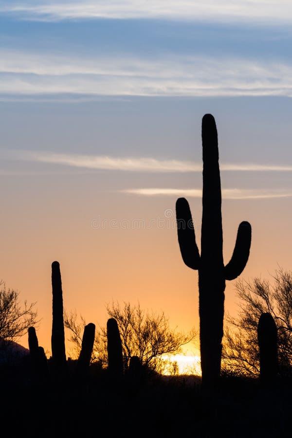 Coucher du soleil de cactus de Saguaro photo stock