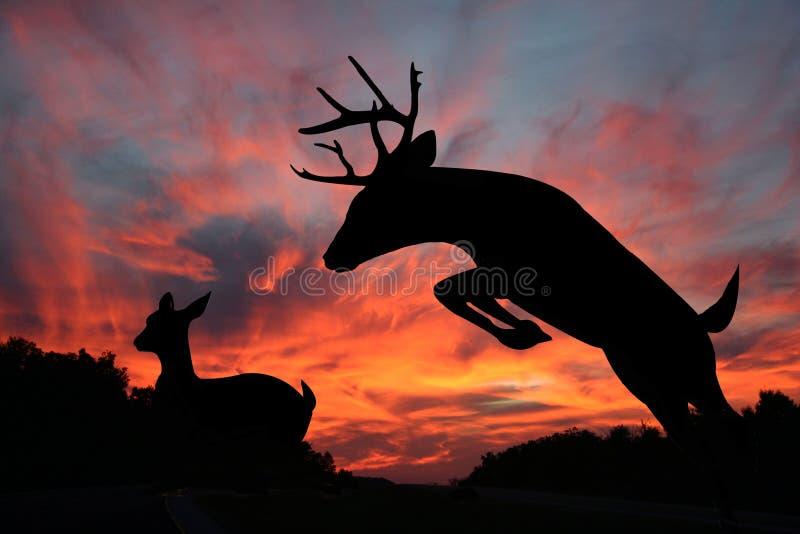 Coucher du soleil de cerfs communs - daine de Whitetail et type de saut images libres de droits