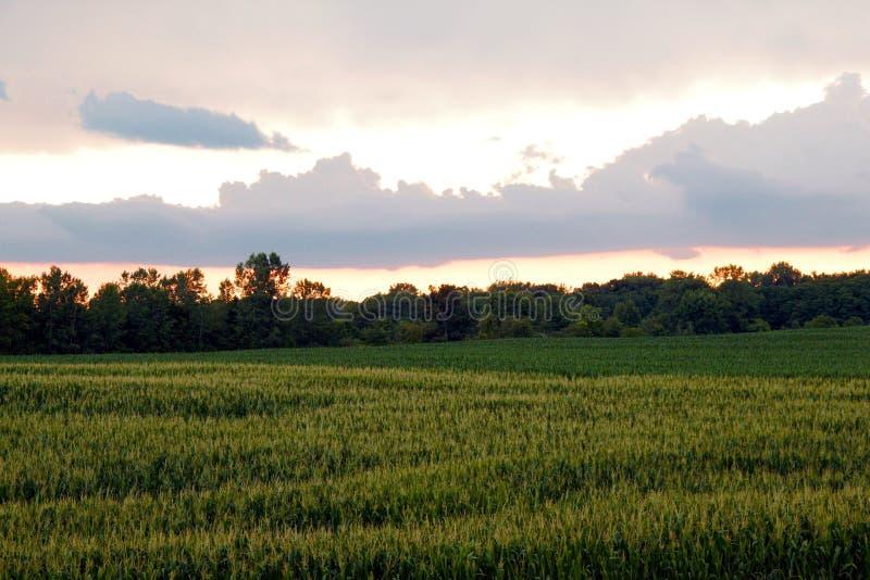 Coucher du soleil de champ de maïs photos libres de droits
