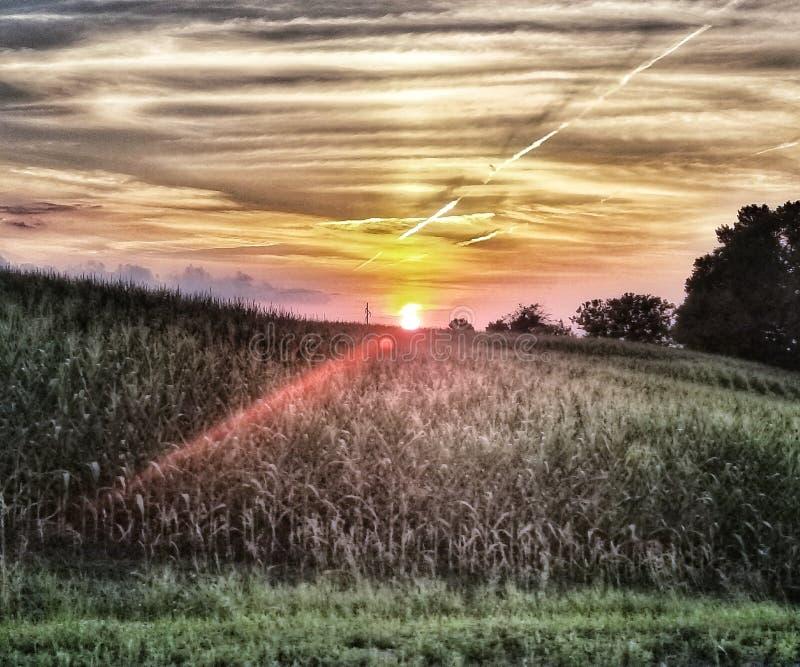 Coucher du soleil de champs de maïs images libres de droits