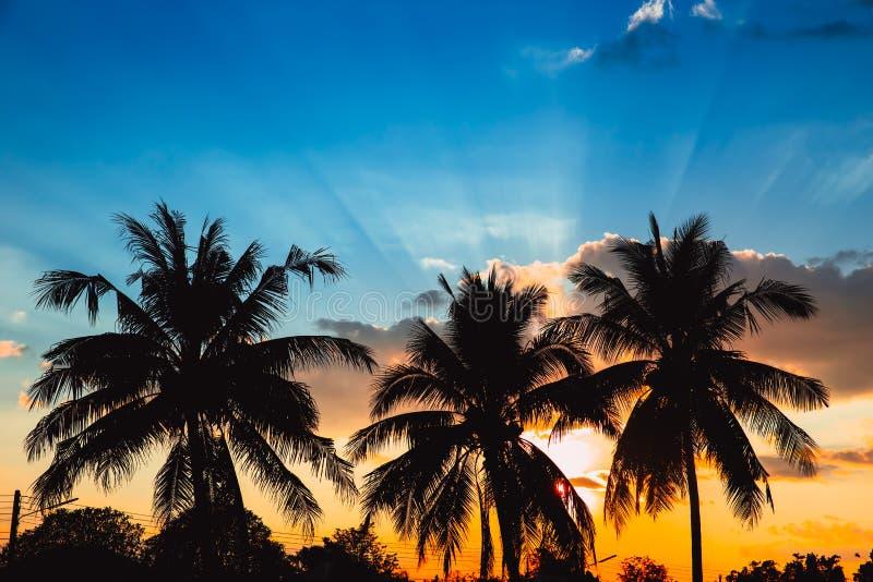 Coucher du soleil de ciel bleu d'Hawaï d'arbre de noix de coco de silhouette photos stock