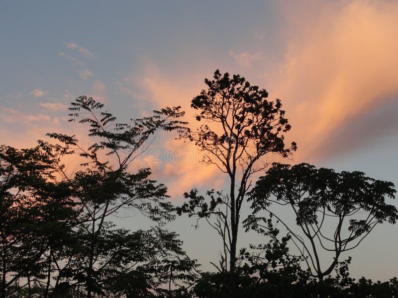 Coucher du soleil de cime d'arbre sur la grande île d'Hawaï images stock