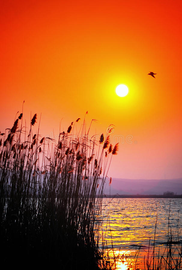 Coucher du soleil de delta de Danube photo stock