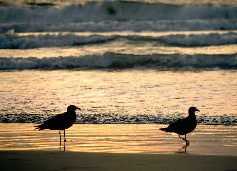 Coucher du soleil de deux mouettes photo libre de droits