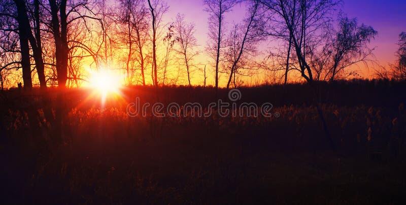Coucher du soleil de forêt image libre de droits