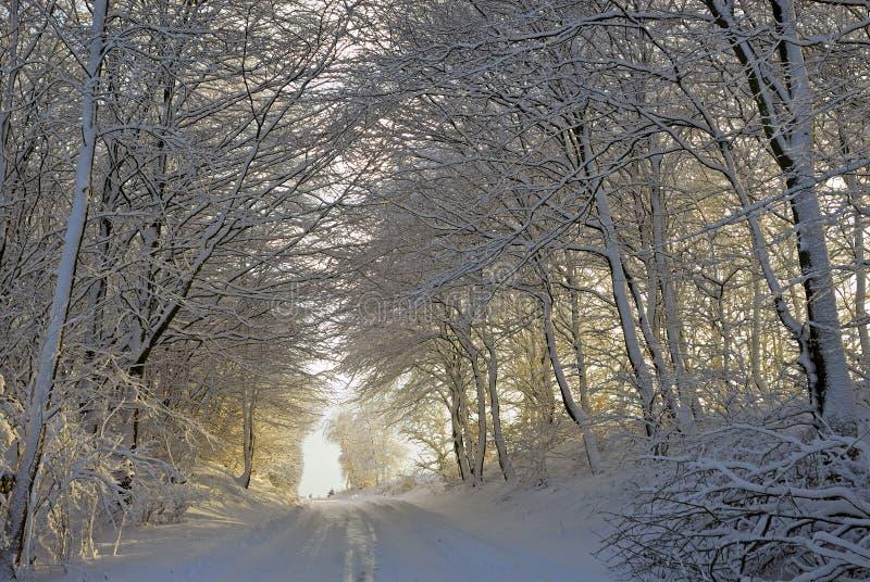 Coucher du soleil de forêt de l'hiver photographie stock libre de droits