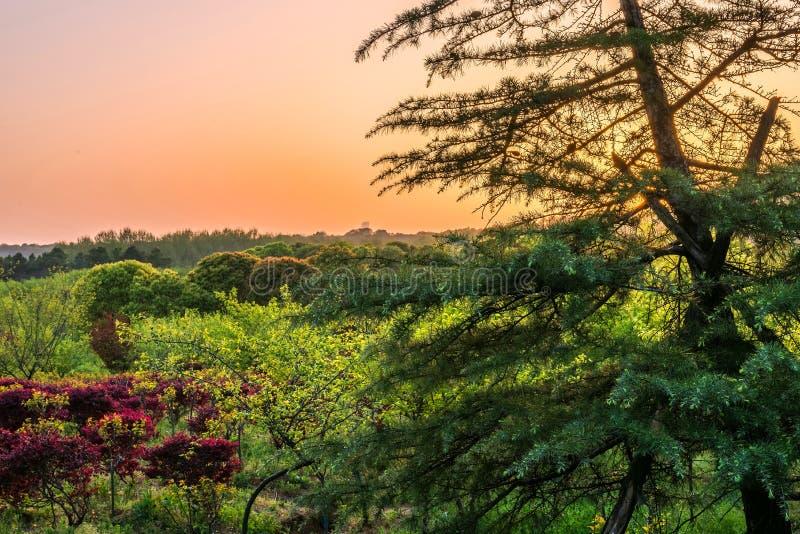 Coucher du soleil de forêt de montagne photos libres de droits