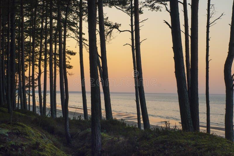 Coucher du soleil de forêt de pin à la mer baltique photo stock