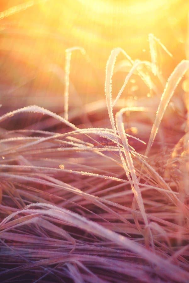 Coucher du soleil de gel d'herbe photos stock