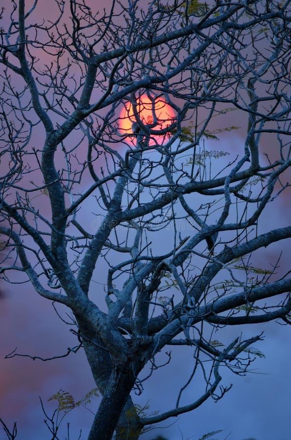 Coucher du soleil de hantise derrière un arbre sans feuilles photo libre de droits