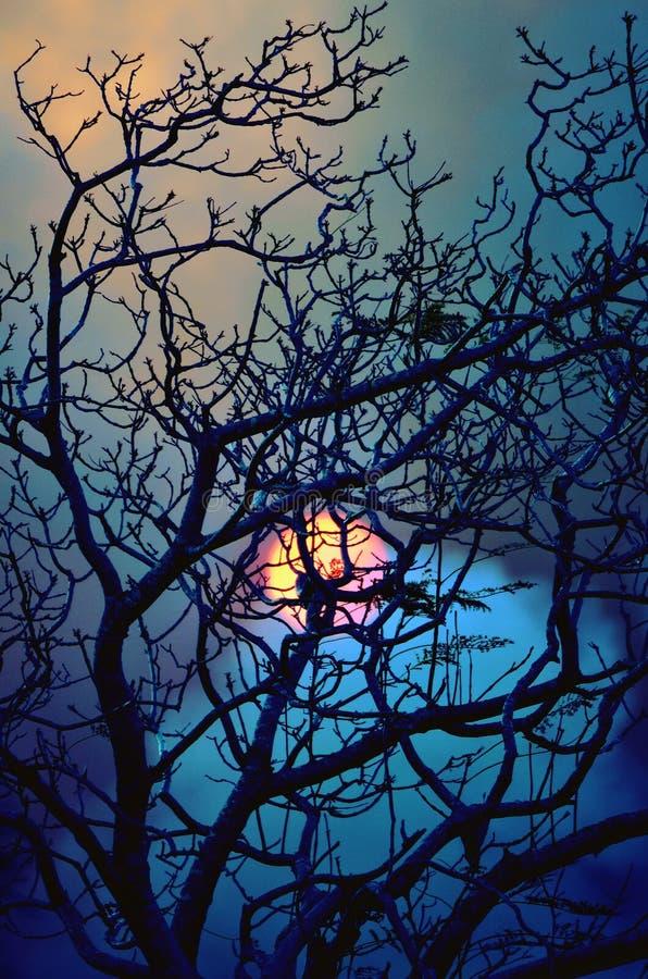 Coucher du soleil de hantise derrière un arbre sans feuilles photos stock