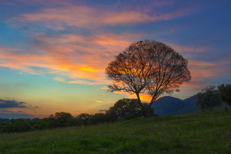 Coucher du soleil de HDR avec l'arbre dans la région 8 de Magaliesburg photographie stock