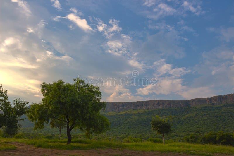 Coucher du soleil de HDR avec l'arbre dans la région 3 de Magaliesburg photo stock