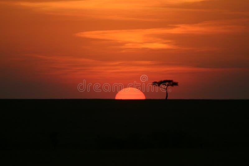 coucher du soleil de l'Afrique photos libres de droits