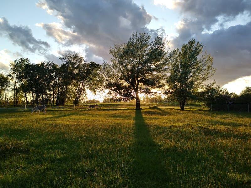 Coucher du soleil de l'Idaho image stock
