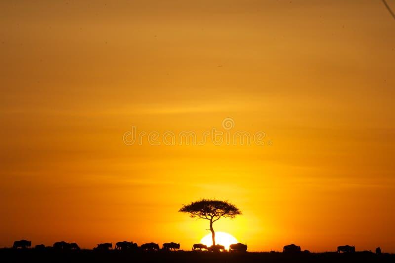 Coucher du soleil de Lion King images stock
