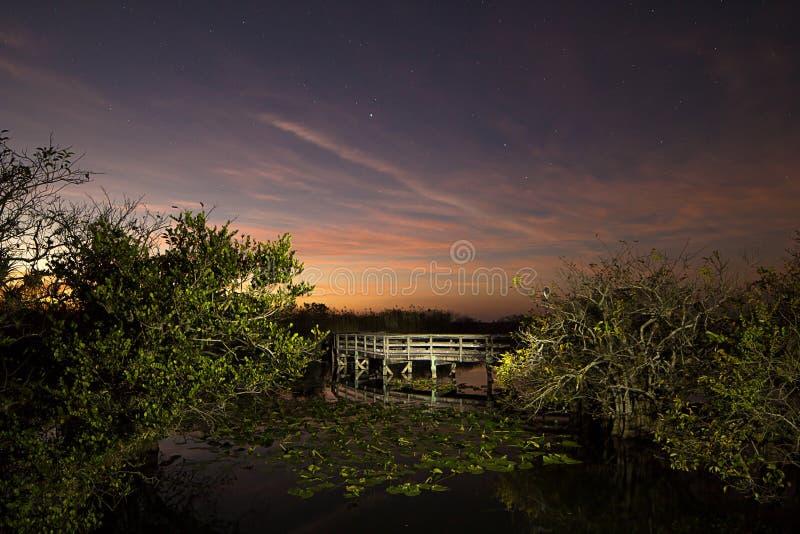 Coucher du soleil de marais - Anhinga chez Twighlight photo stock