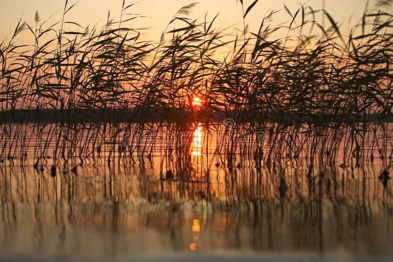 Coucher du soleil de milieu de l'été en roseaux, réfléchissant sur l'eau en Finlande du sud, Padva, Raseborg photo stock