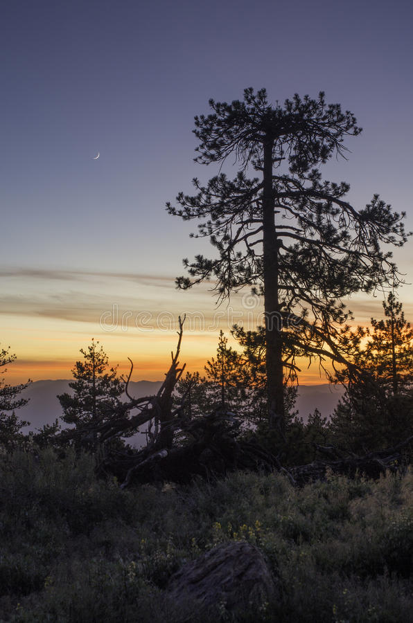 Coucher du soleil de montagne de pin images stock