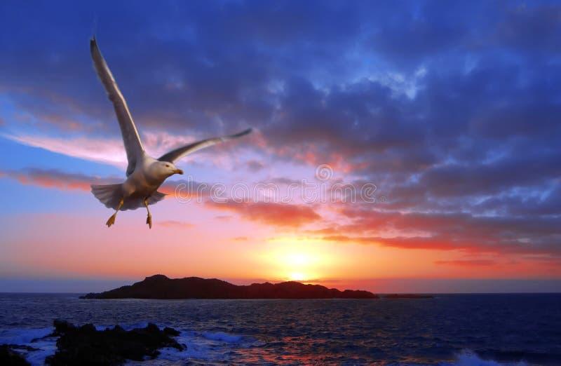 coucher du soleil de mouette image libre de droits