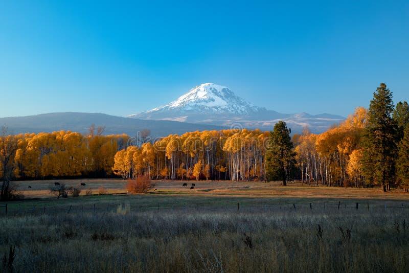 Coucher du soleil de Mt Adams avec des trembles d'automne images libres de droits